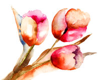 Three Tulips flowers. Watercolor illustration Stock Photo