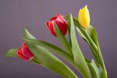 Three tulips Stock Photo