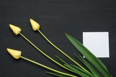 Three tulips on grunge wooden background with empty paper Royalty Free Stock Photography