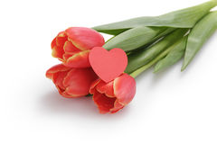 Three tulips with paper heart Stock Image