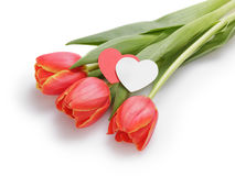 Three tulips with paper hearts Stock Photos