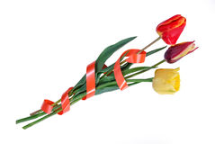 Three tulips with tape Royalty Free Stock Photos