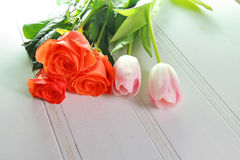 Three tulips on a white background Royalty Free Stock Image