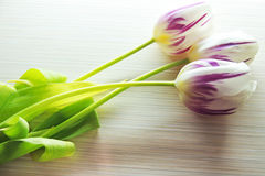 Three tulips on a white background Stock Image