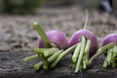 Three Turnips Stock Photo