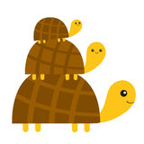 Three turtle tortoise pyramid Cute cartoon character family set. Father, mother, baby. Pet animal collection. Education cards for. Kids. White background Royalty Free Stock Photography
