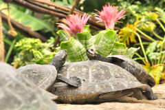 Three turtles in garden Stock Photos