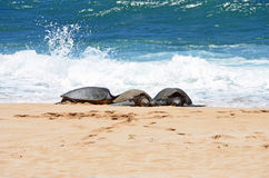 Three turtles in the sand just out of water Royalty Free Stock Photos