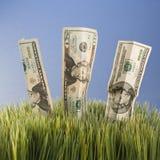 Three twenty dollar bills royalty free stock photo