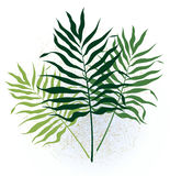 Three twigs with long leaves. Three green vegetative twigs with long leaves Royalty Free Stock Photo