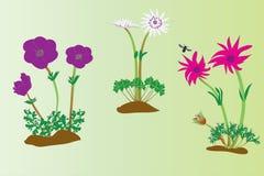 Three types of anemone Royalty Free Stock Photos