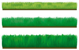Three types of border grass Stock Images