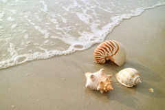 Three types of natural seashells on the beach with the swash Stock Image