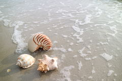 Three types of natural seashells on the beach with the wave swash Stock Image