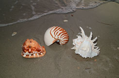 Three types of natural seashells on the sand beach approaching by soft wave Stock Photography