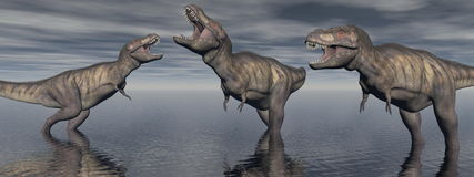 Three tyrannosaure dinosaur - 3d render Stock Images