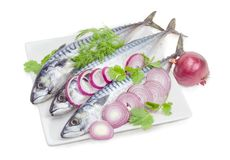 Uncooked Atlantic mackerel, onion and potherb on a white backgro. Three uncooked Atlantic mackerel with round slices of red onion, twigs of dill and cilantro on Stock Photos