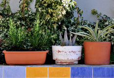 Three unequeal pots with plants Royalty Free Stock Images