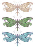 Three  unique dragonflies. Three dragonflies with unique pattern Royalty Free Stock Photos