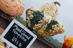 Three Unique Pumpkins on Display Stock Photography