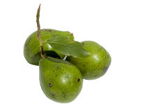 Three Unripe Avocado Pears with Stalk Attached Stock Images