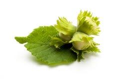 Unripe hazelnuts with leaf isolated royalty free stock photos