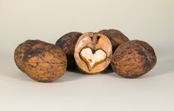 Three unshelled walnuts. And broken half with nutmeat  on white background Stock Image