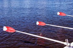 Three Upright Oars of a Rowboat. Three upright red and white oars of a rowboat. The unseen boaters are synchronizing their paddles to take that first dip into stock images