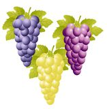 Three varicoloured clusters of vine on a white background Stock Photo