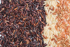 Three variety kinds of brown rice Stock Photography