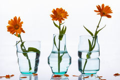 Three vase and flowers on white background. Stock Image