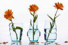 Three vase and flowers on white background. Stock Image