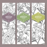 Three vector banners Damask rose, jasmine, ylang sketch. Aromatherapy series. Stock Image