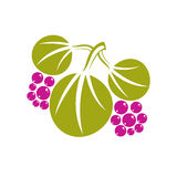 Three vector flat green leaves with purple berries or seeds. Her Royalty Free Stock Images