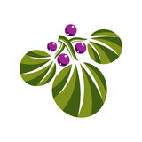 Three vector flat green leaves with purple berries or seeds. Her Stock Photography