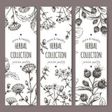 Three vector labels with burdock, chicory, saint john wort. Set of 3 vector herbal tea labels with burdock, chicory and saint john wort hand drawn sketch. Placed Royalty Free Stock Photos