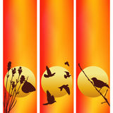 Three vector sunset illustrations. Royalty Free Stock Photos