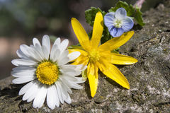 Wildflowers Royalty Free Stock Images