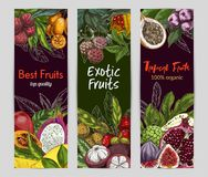 Three vertical banners with exotic fruits. On dark background, hand drawn vector illustration, Noni fruit, kumquat, pomegranate, lychee, dragon fruit Stock Images