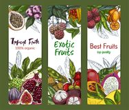 Three vertical banners with exotic fruits. Hand drawn vector illustration, Noni fruit, kumquat, pomegranate, lychee, dragon fruit Royalty Free Stock Photo