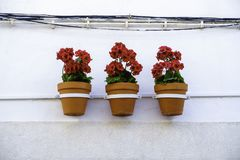 Three vibrant red geranium flowers in flowerpots hang in line from a white house wall royalty free stock photo