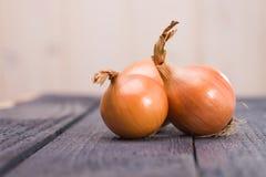 Three vibrant ripe onions Royalty Free Stock Photos