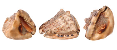 Three views of big sea shell Stock Photo