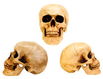 Three views of the human skull Stock Photography