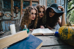 Three vintage witches perform magic ritual. At the table, reading a magical book on the eve of Halloween Royalty Free Stock Photo