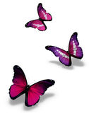 Three violet butterflies. On white background Royalty Free Stock Photography
