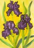 Three violet irises, watercolor Stock Photo