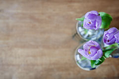 Three violet tulips creative use focus Stock Images