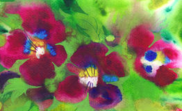 Three violets Royalty Free Stock Image