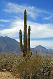 The three virgins volcanoes with cactus foreground Royalty Free Stock Images